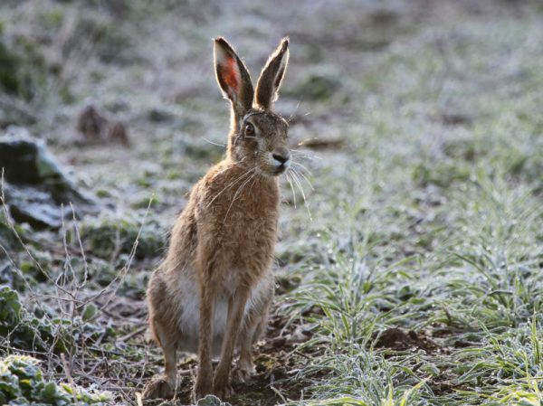 DW curious hare