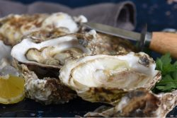 DS web Oysters